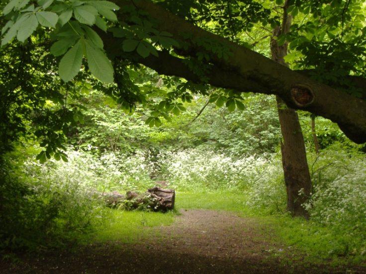 10 Hidden Gardens to visit in London