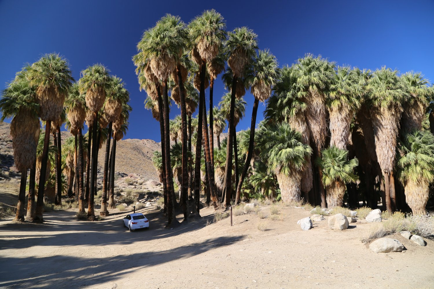 Revealed: The 10 Most Instagrammable Places in Palm Springs