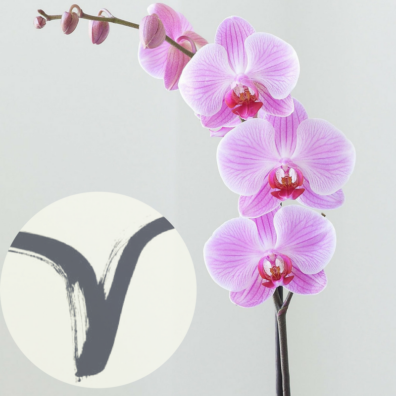 The Houseplant You're Going To Buy According To Your Zodiac Sign! 1