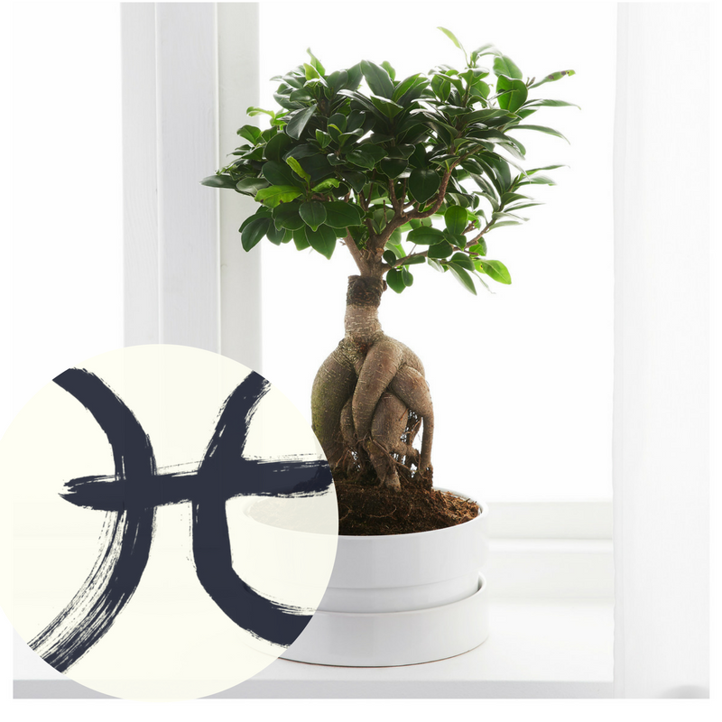 The Houseplant You're Going To Buy According To Your Zodiac Sign! 11