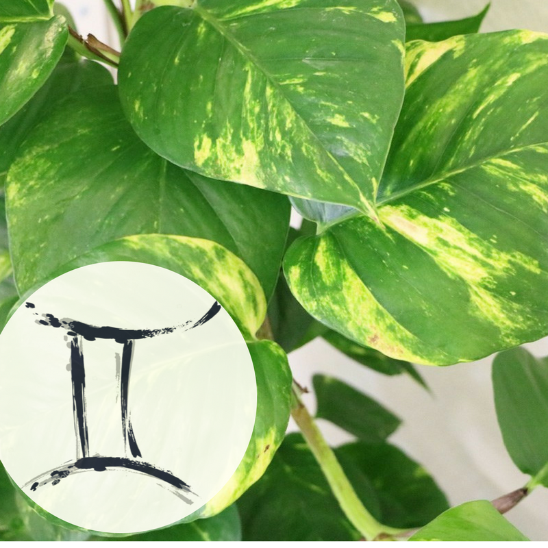 The Houseplant You're Going To Buy According To Your Zodiac Sign! 12