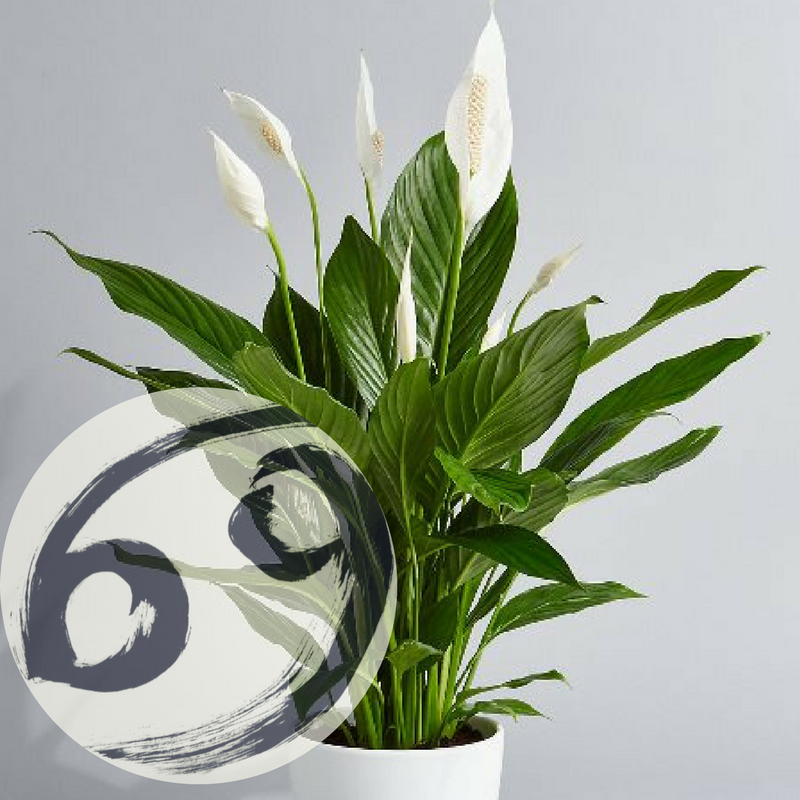 The Houseplant You're Going To Buy According To Your Zodiac Sign! 3