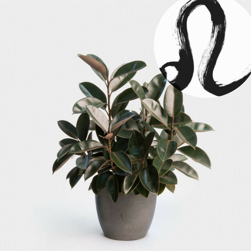 The Houseplant You're Going To Buy According To Your Zodiac Sign! 4