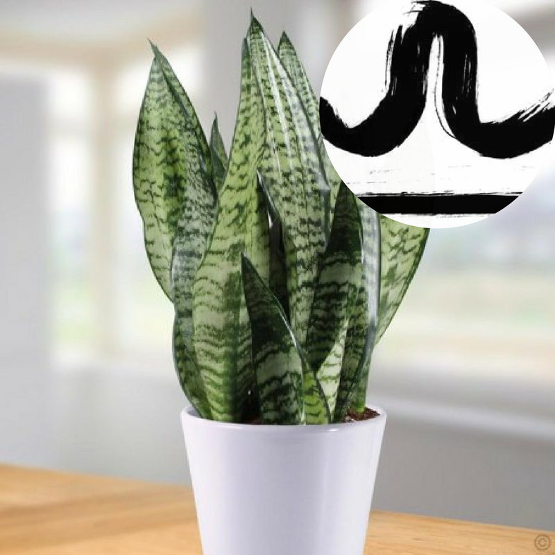 The Houseplant You're Going To Buy According To Your Zodiac Sign! 6