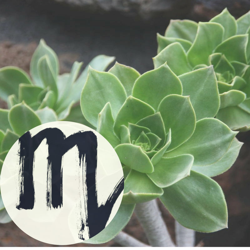The Houseplant You're Going To Buy According To Your Zodiac Sign! 7